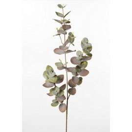Eucalyptus gren 70 cm