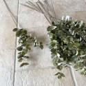Eucalyptus gren grøn - 70 cm.
