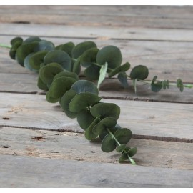 Eucalyptus gren fra Chic Antique