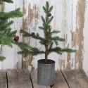 Grantræ med kogler i zinkpotte - H48 cm